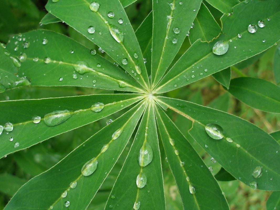blad met regendruppels